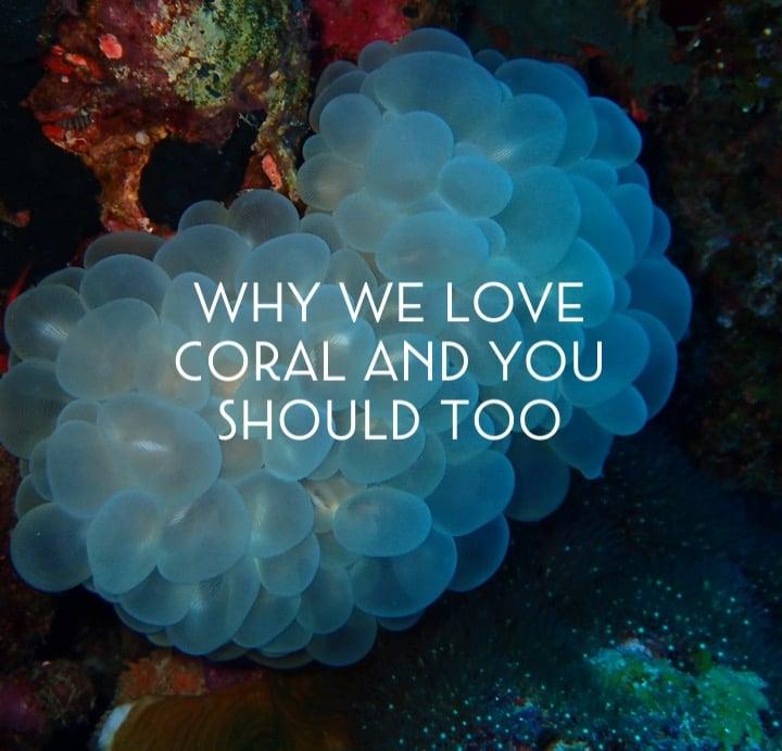Coral hero blog