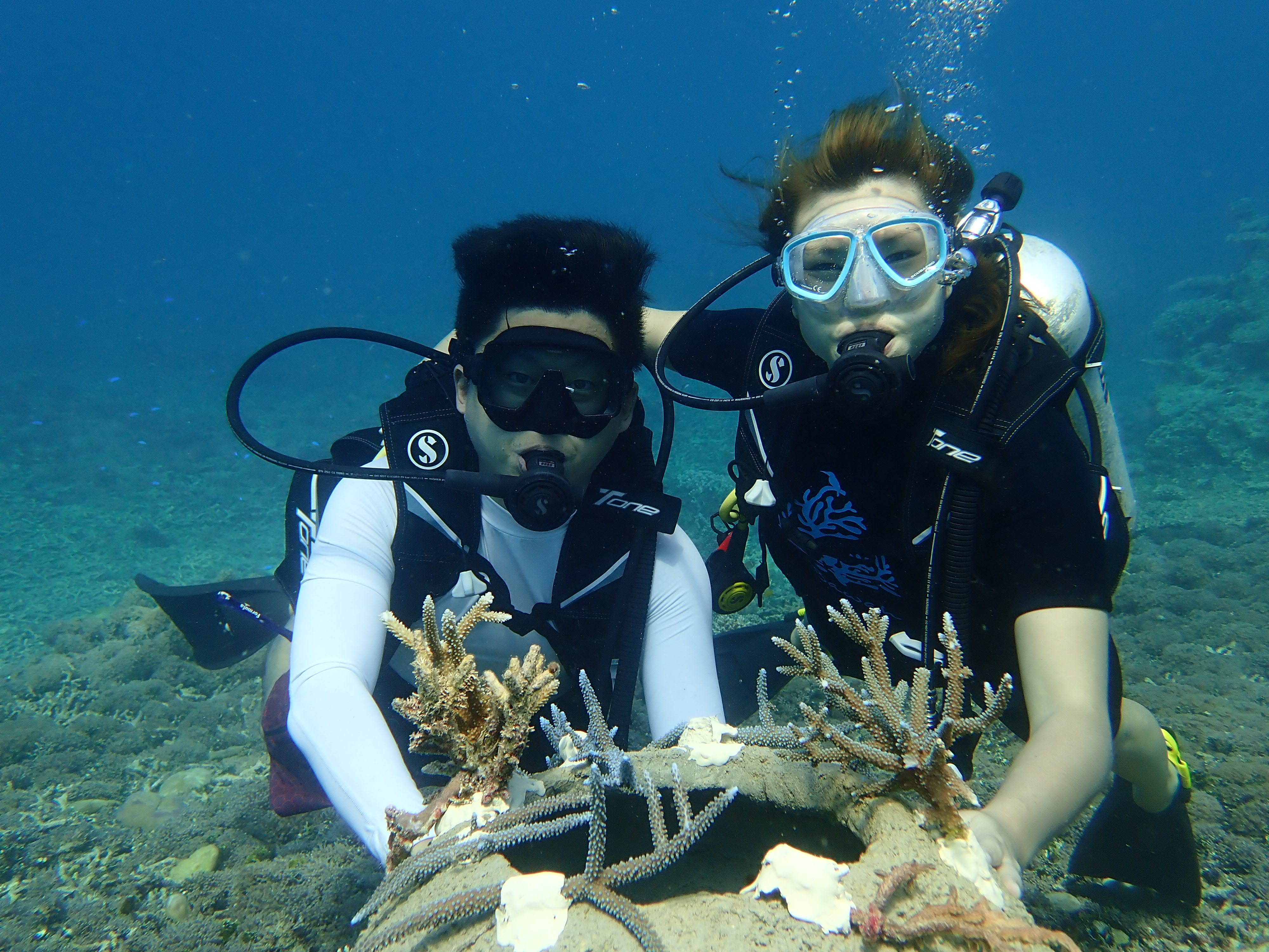 Couple Marine dive coral conservation