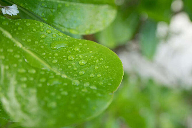 green leaf rain droplets nature