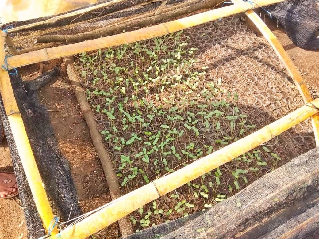 Organic Farming2