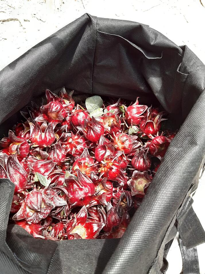 Rosella Harvest Permaculture