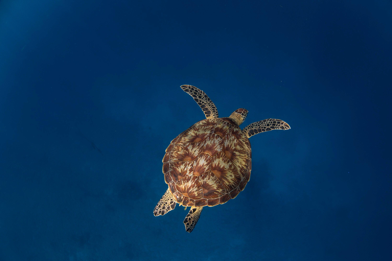 072A9625 Turtle Underwater