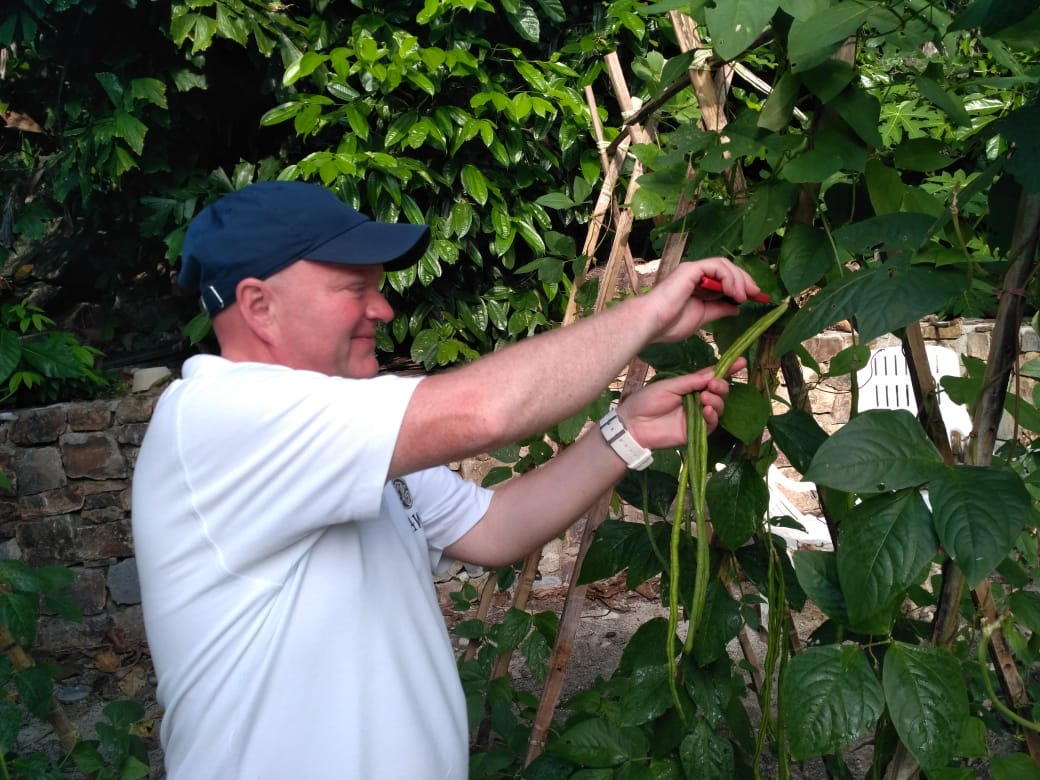 Long Beans growing at Bawah Reserve permaculture gardens