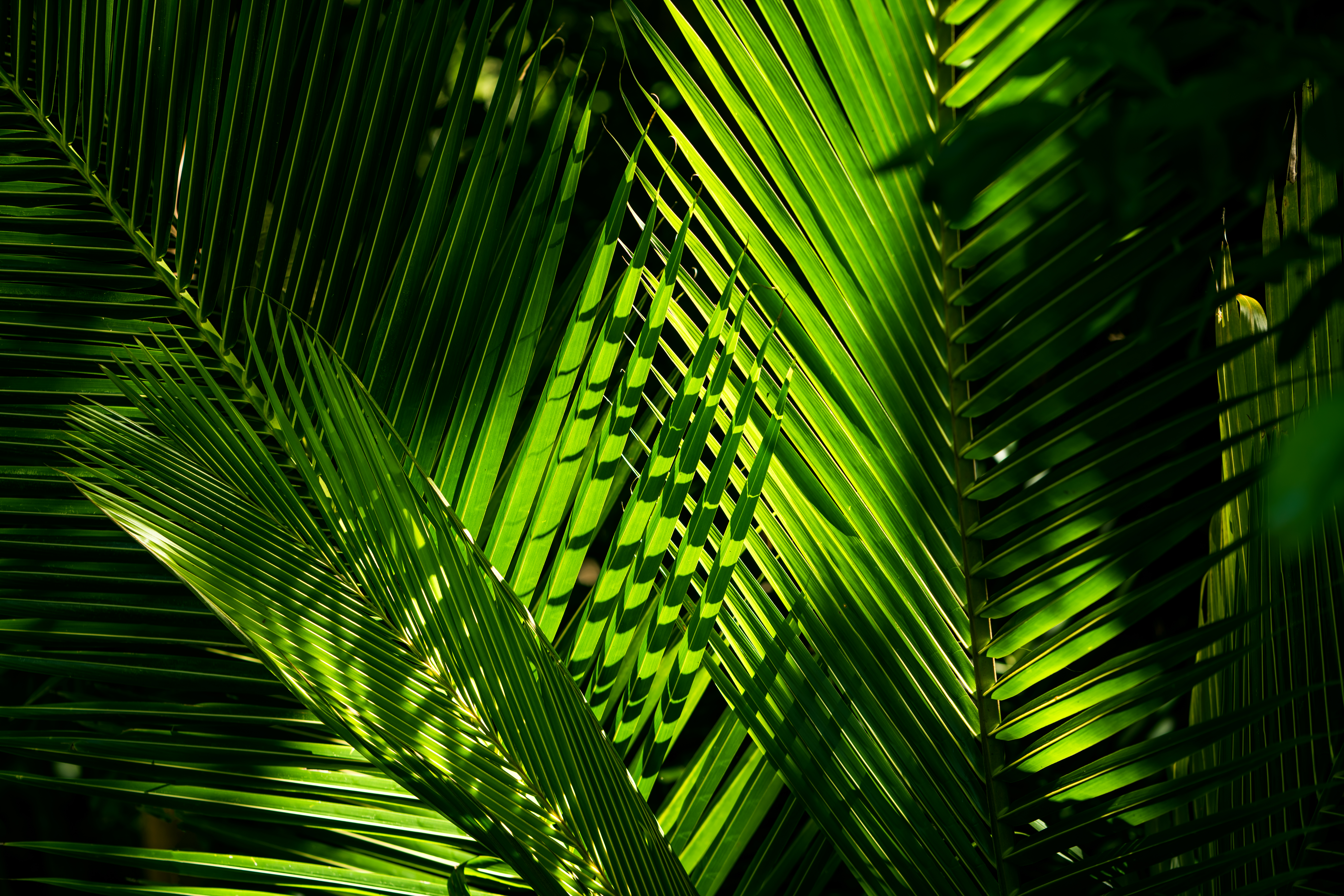 green_palm_leaves_with_sunlight