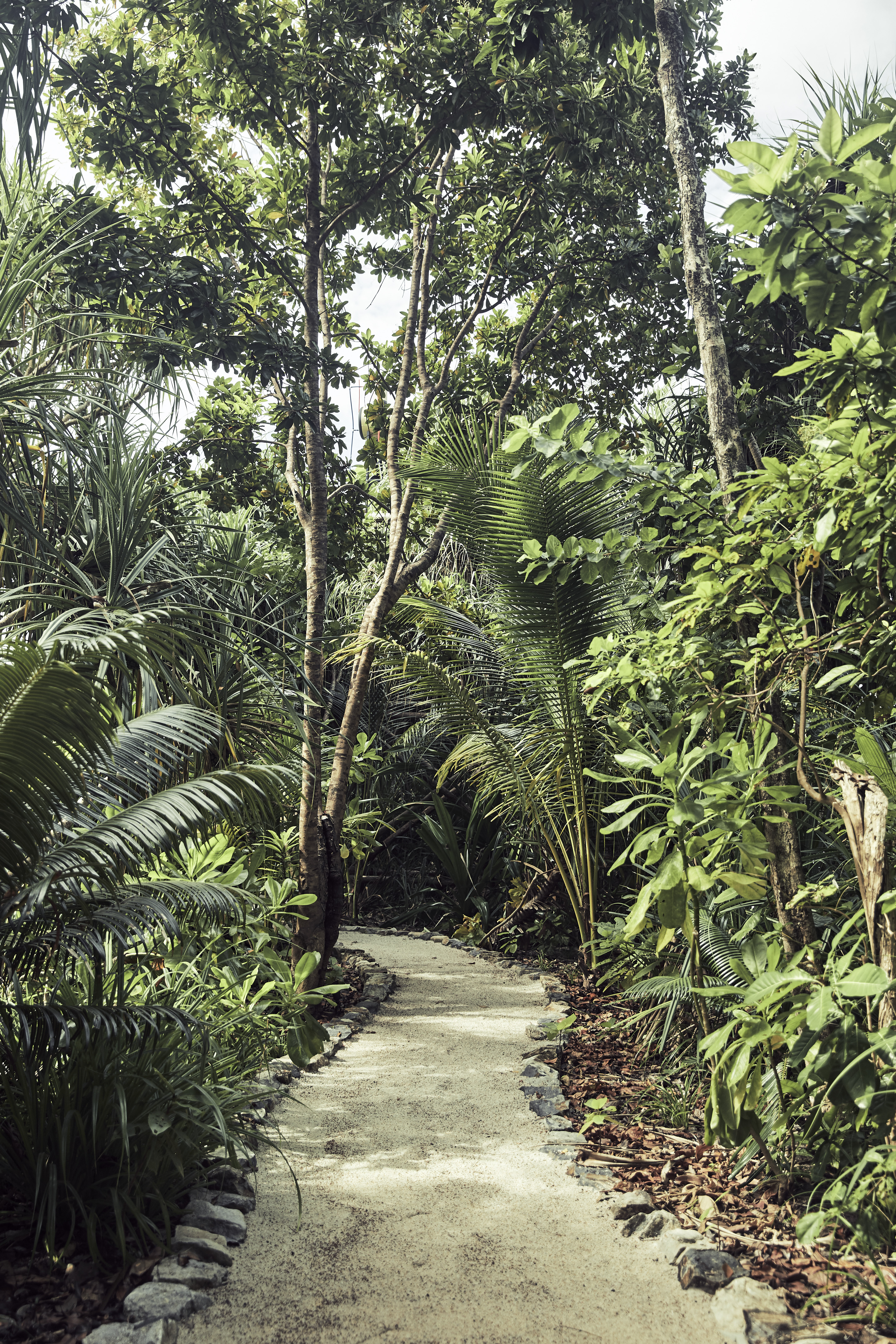 sand_pathway_between_foliage