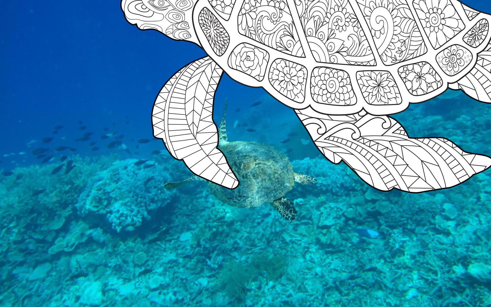 Zentangle doodle art image of turtle, Bawah Reserve, Indonesia